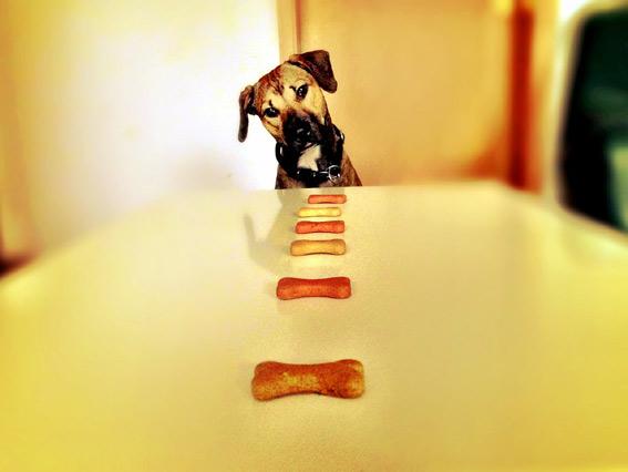 food-dog